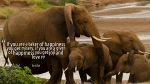 ... Love: Quotes By Sri Sri Ravi Shankar And The Pictureof The Elephants