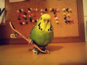 Parrot Funny Skateboarding
