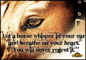 Cowgirl and Horse Sayings | horse whisper quote jpg let a horse ...