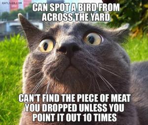 Crazy Cat Lady Meme Cat Funny Cats Quote Humor Meme