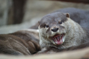 Source: http://dailyotter.org/2013/03/15/otter-is-happy-youre-here/