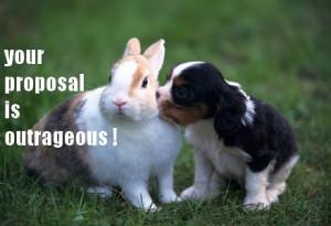 Funny Rabbits Funny rabbit