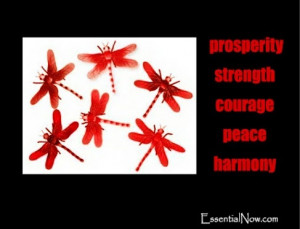 symbolism of the dragonfly: prosperity good luck strength peace ...