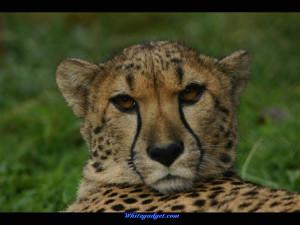 91669d1325571103-wild-animals-wild-animals-pic.jpg