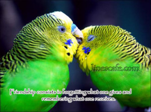 Parrot Friendship Quotes