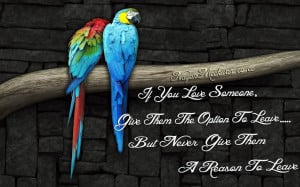 Beautiful Love Parrots Love Quote By: Nayan Meckwan