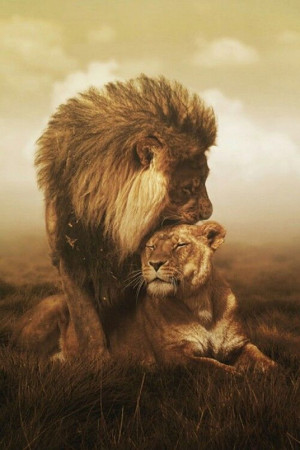TOP 10 Emotional photos of animals. Jesus as a loving king . The Loin ...