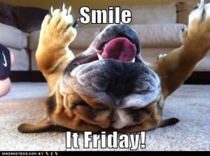 Friday Fun: Five Hilarious and Adorable Dog Videos