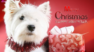 Funny Christmas Quotes HD Wallpaper 25