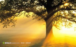 唯美阳光照射下的大树 (JPG)