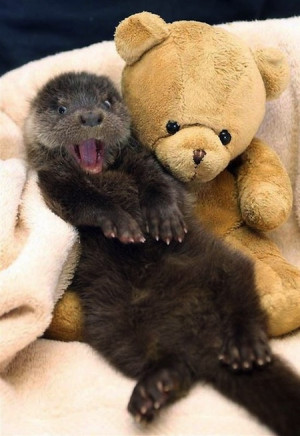 Fun fact: Otter's fur is the densest of any animal on Earth – an ...