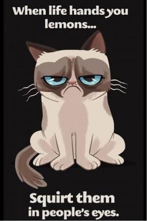 Grumpy-cat-is-grumpy.jpg
