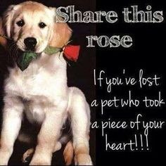 ... rose love quotes animals quote miss you dog puppy pets pet sad quotes
