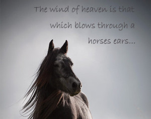 Horse Quotes For Girls Horse quote, inspirational