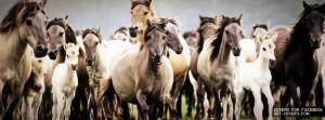 Wild Horses Facebook Covers