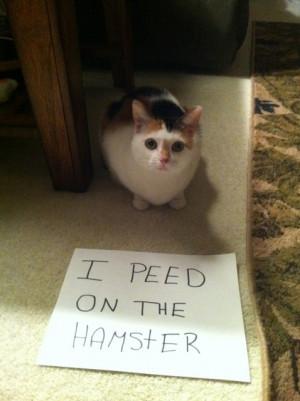 LOL hamster funny cats cat shaming