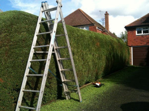 CS GARDEN SERVICES - Grass Cutting Service - Tidy-Ups - FREE QUOTE !!