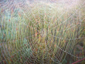 Related Pictures spider web with spiders tattoo on hand there are ...