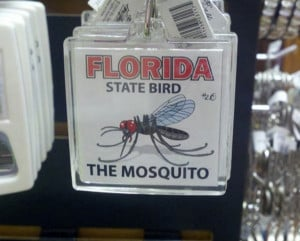 Florida_State_Bird_funny_picture