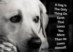 ... , truths, wonderful truths, Good sayings, about dogs, nice quotes