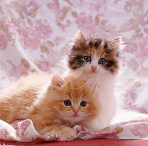 very cute cat and kitten picture cute white brown kittens