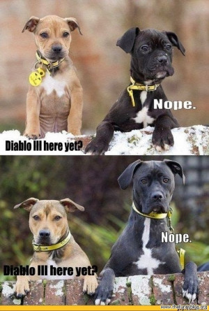 funny dogs birthday,funny dogs buzzfeed,funny dogs barking,funny dogs ...