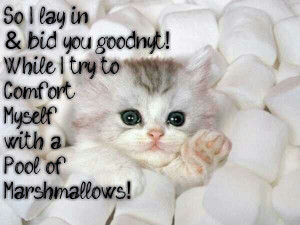 Cats In Marshmallows