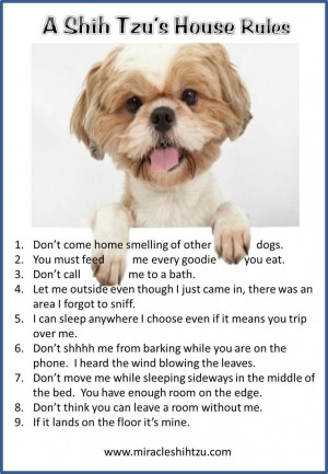 ... House Rules at Miracle Shih Tzu http://miracleshihtzu.com/dog-quotes