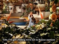 Wizard Of Oz Quotes Hearts Desire ~ wizard of oz on Pinterest | 15 ...