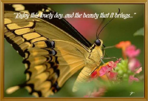 ... .com/wp-content/uploads/2012/11/Butterfly-Quotes-20.jpg[/img][/url