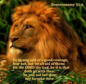 Lion of JudahWild Cat, Big Cat, Animal Salvajes, Majestic Lion, Animal ...
