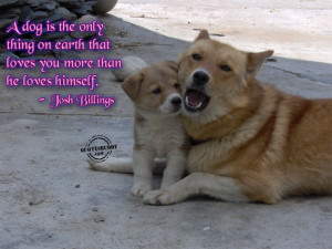 Funny Animal Pictures With Quotes About Life: Animal Quotes About Love ...