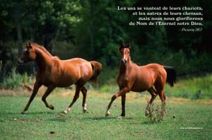 Les uns se vantent de leurs chariots, et les autres de leurs chevaux ...