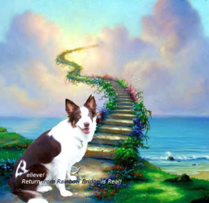 Memorials for Pets Return from Rainbow Bridge
