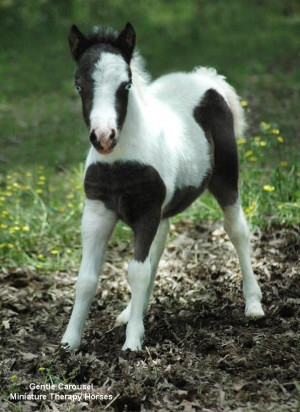 This mini reminds me of my pony shadow but a smaller version of her ...