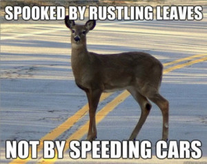 Funny Hunting