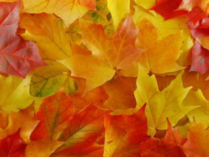 Beautiful Fall Foliage and Fall Quotes