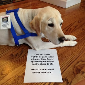 Therapy Dog Quotes Quotesgram