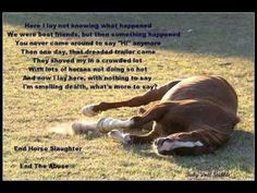 The horse: Perhaps one of the most abused animals in American society ...