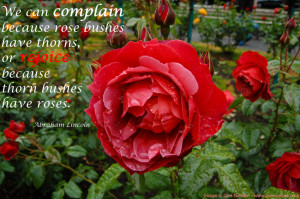Quotes About Roses And Thorns Rose bushes have thorns,