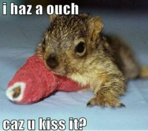cute animals with sayings squirrel baby i haz a ouch