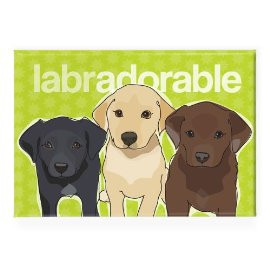 ... Refrigerator Magnets with Funny Sayings, Labrador Retriever Gifts