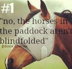 What are some funny things non-horse people have asked you? Most often ...