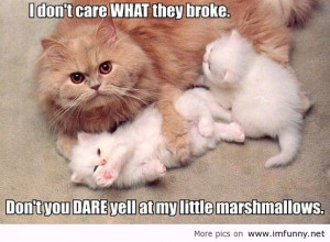 Related Pictures Cute Animal Pictures With Quotes