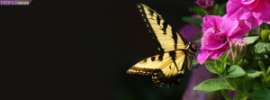 Yellow Butterfly Facebook Cover Preview