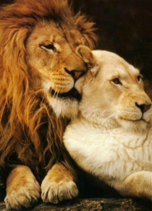 lion and his lioness.
