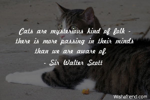 cat-Cats are mysterious kind of folk - there is more passing in their ...