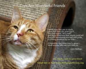 Showing picture: Cat Quotes Gra.