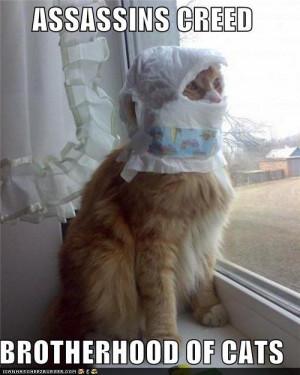 funny Assassin's Creed cats pics