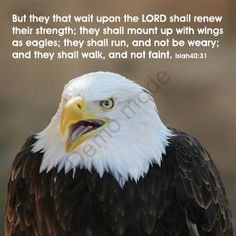 Eagle Scout Quotes and Sayings   But they that wait upon the LORD ...